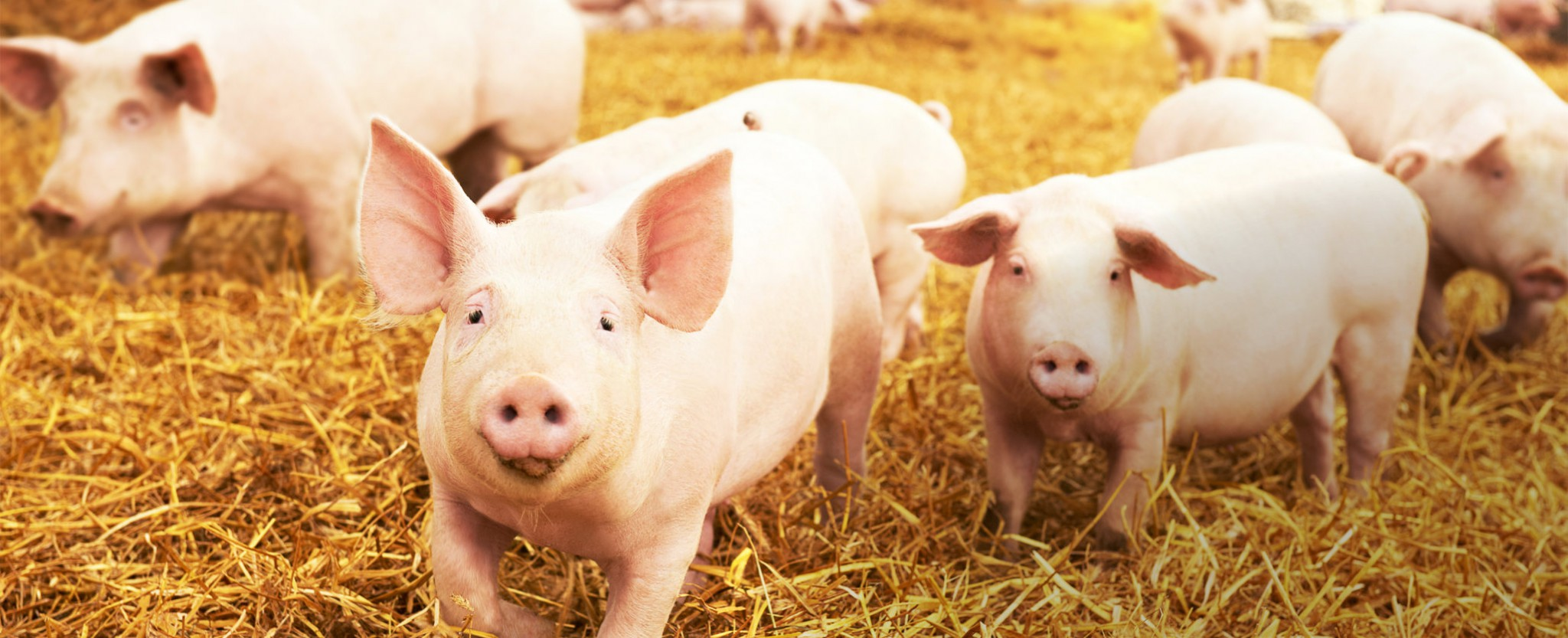 Wilmeat Cut Meat Pty Ltd Home 1